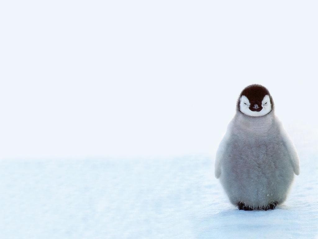 目を閉じるペンギン