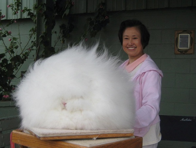 Betty Chu's fluffy angora rabbit