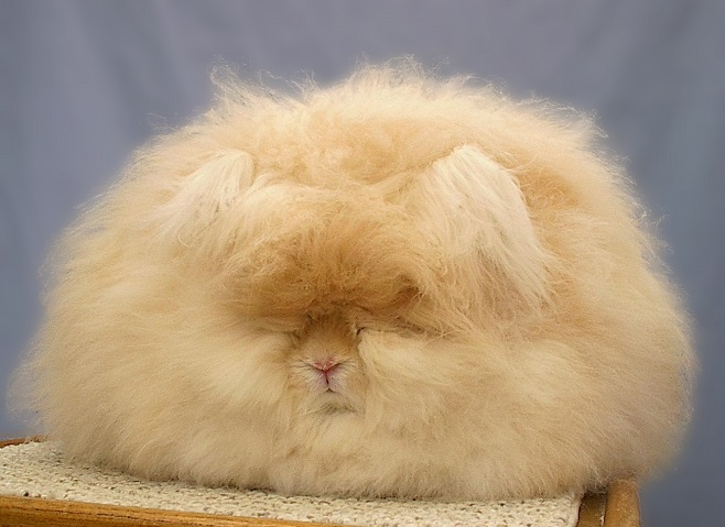 Sleeping Super Fluffy Rabbit