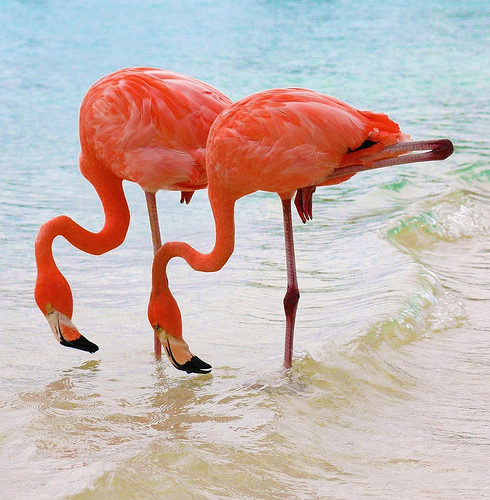 Twin Pink Flamingos
