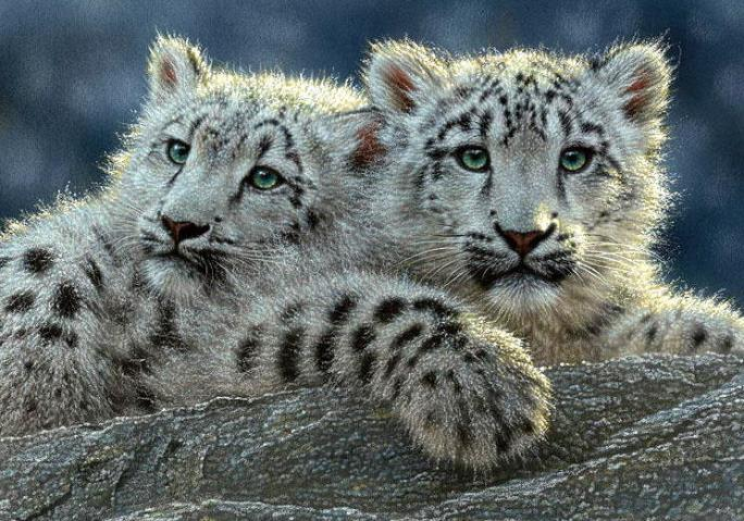 Twin Snow Leopards