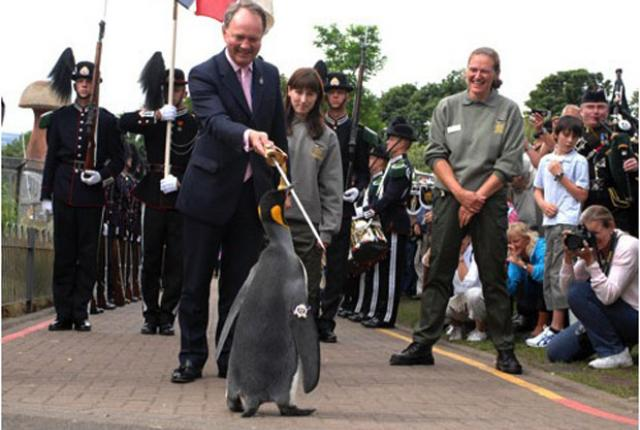 Penguin knighted in Norway