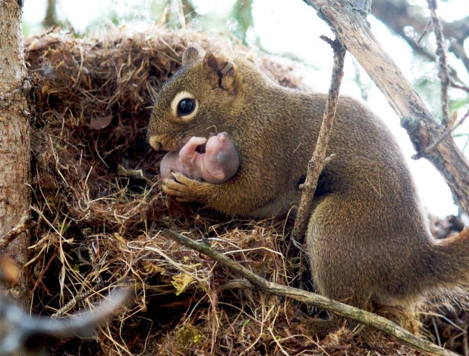 Squirrel adopting a baby