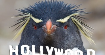 Hollywood Penguin
