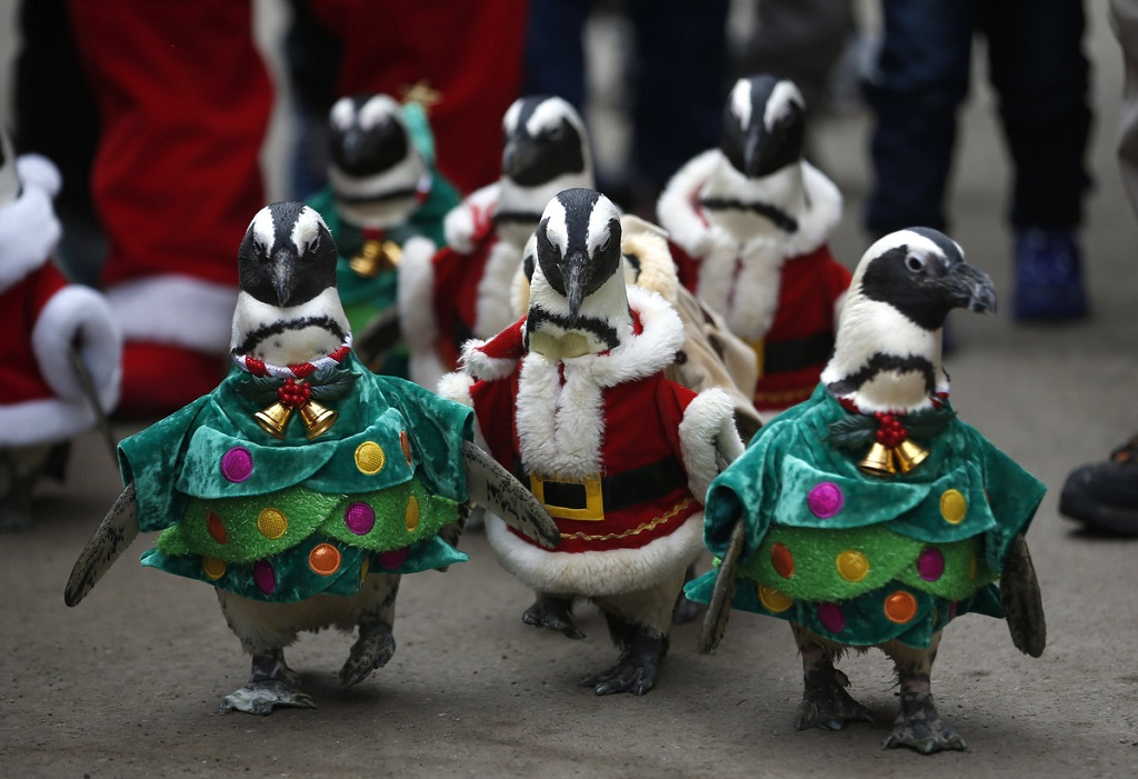 Penguin Santa and the Christmas Trees