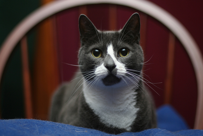 10. Sockington