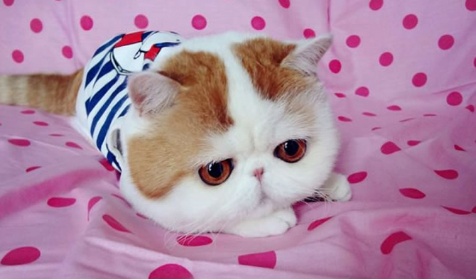 Pics Photos - Top 10 Most Beautiful Cat Breed In World