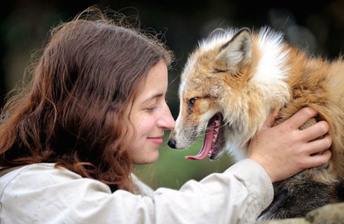 Rescued Fox Raised By Humans Thinks He's A Dog