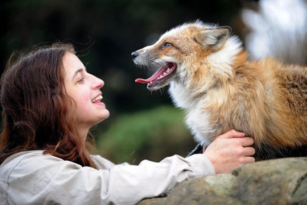 Rescued Fox Raised By Humans Thinks He's A Dog 7