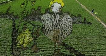 Rice Paddies Works of Art