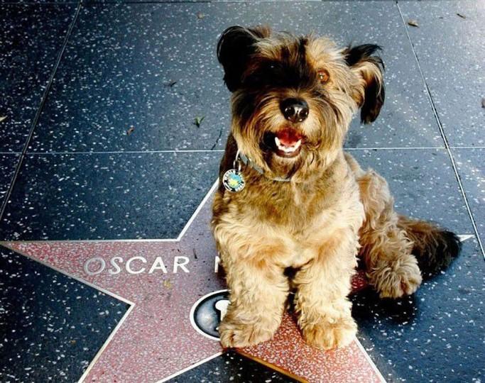 Oscar 'The Traveller Dog'