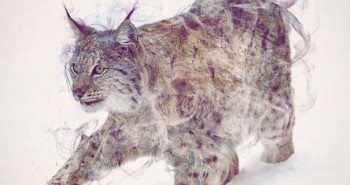 Double Exposure Photos Of Wild Animals