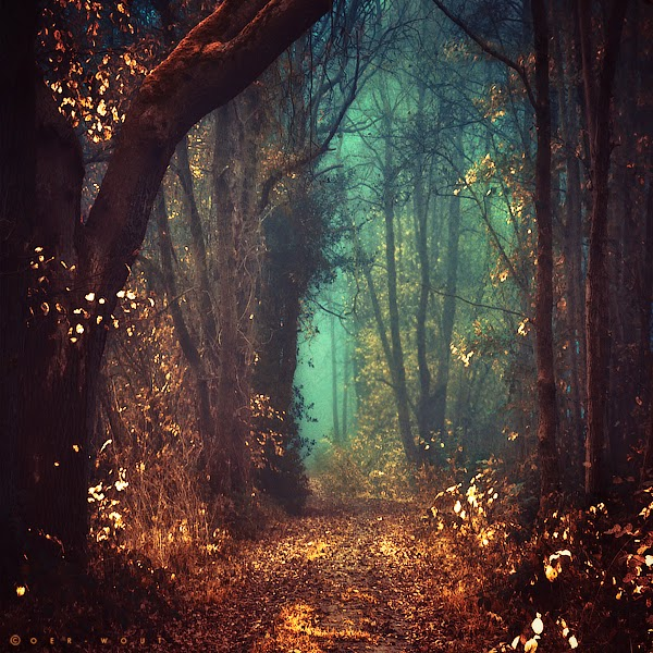 Fairy Tale Forest (Mystic Forest)