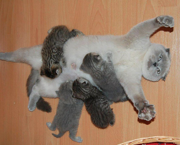 Cat and her litter