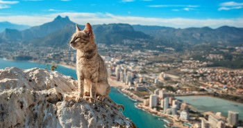 Majestic Cat Watching Over Calp