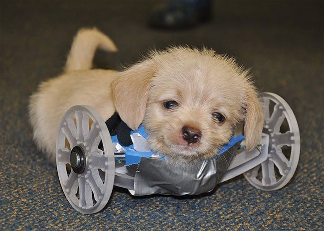 3D Printed Wheelchair for Tumbles 2