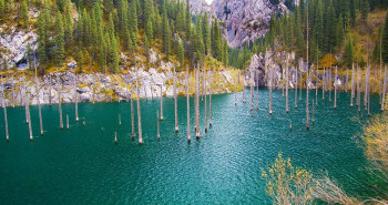 Sunken Forest in Kazakhstan