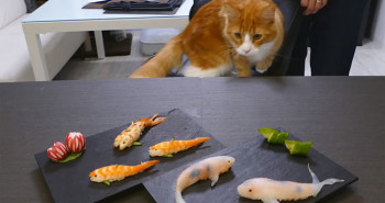 Sushi Looks Like Real-Life Swimming Koi