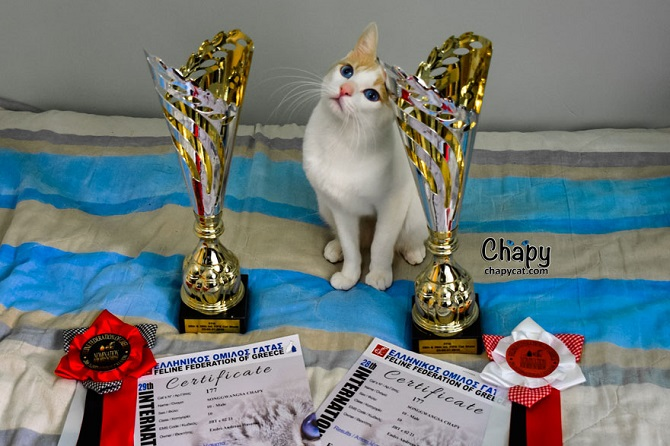 Chapy as a double winner