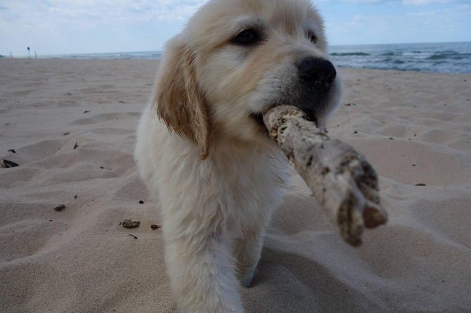 Puppy at the beach