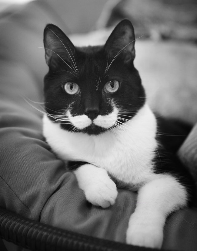 The cat with a magnificent moustache