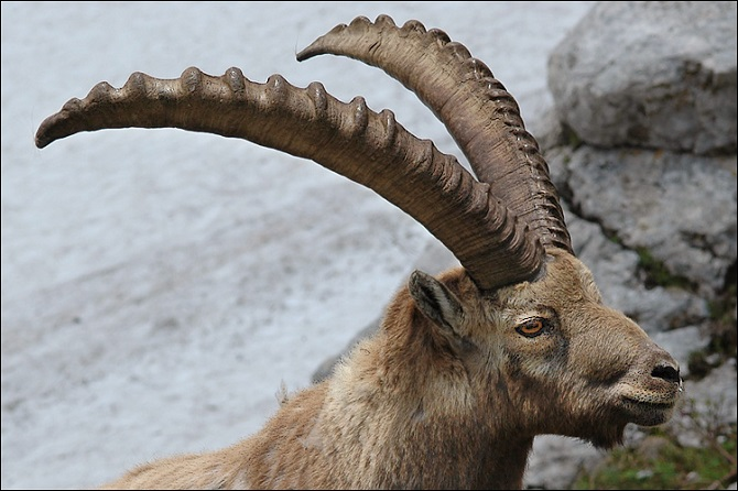 Unique Horns