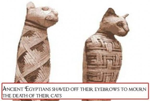 Grief-Stricken Egyptians Shaved for Their Cats