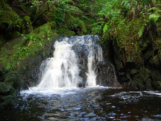 Puck's Glen, near Dunoon in the West of Scotland