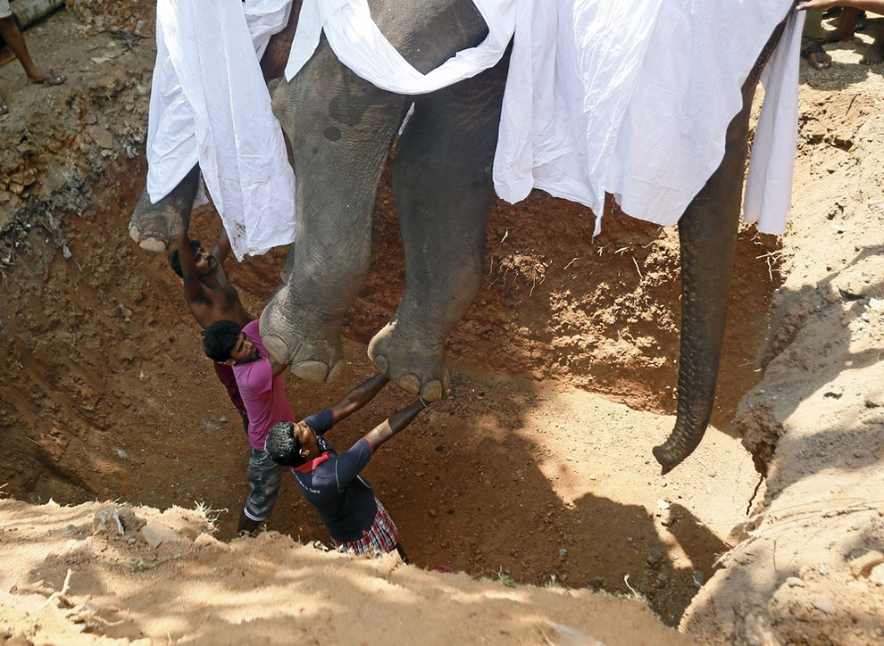 Local villagers prepare to bury the body of elephant Hemantha during a religious ceremony at a Buddhist temple in Colombo