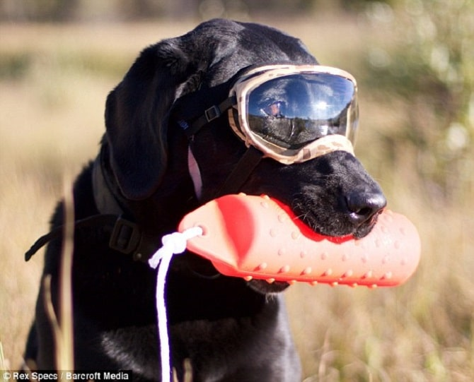 d631c08158 Rex Specs Dog Goggles - Eye Protection for The Active Dog Christmas ...