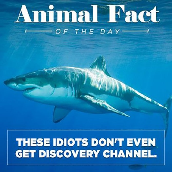 Animal Fact Of The Day