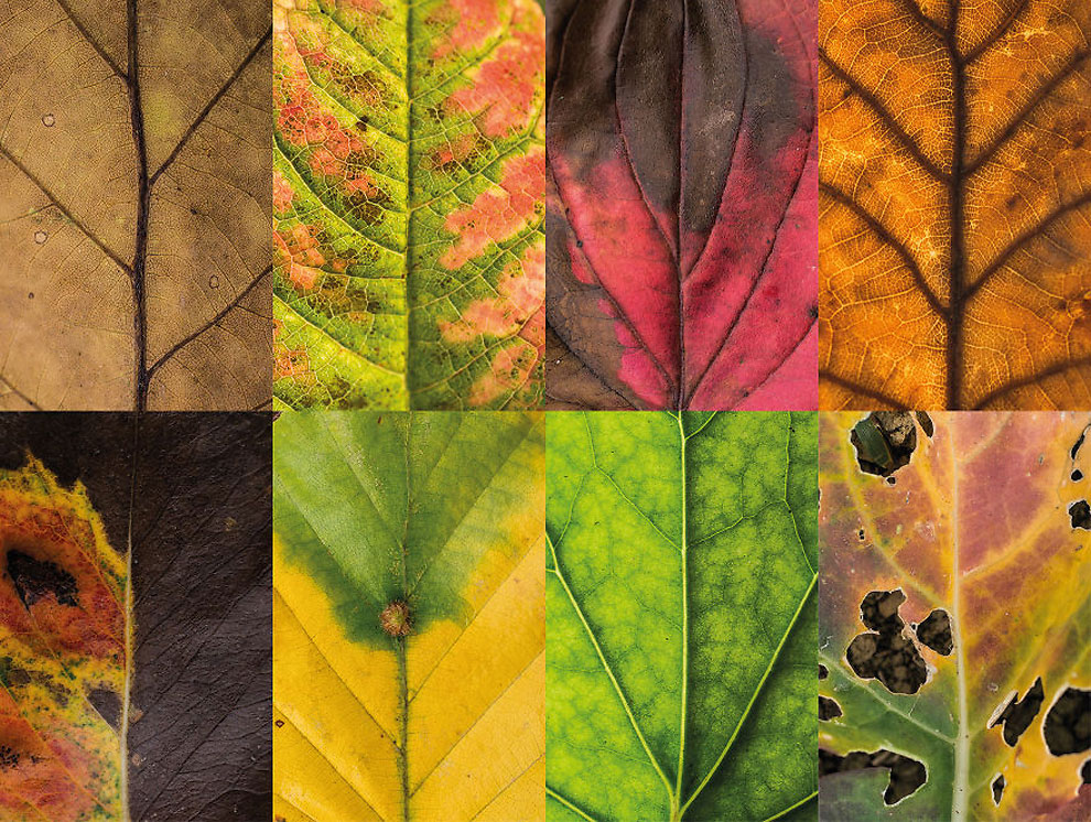 Diverse and Imperfect leaves