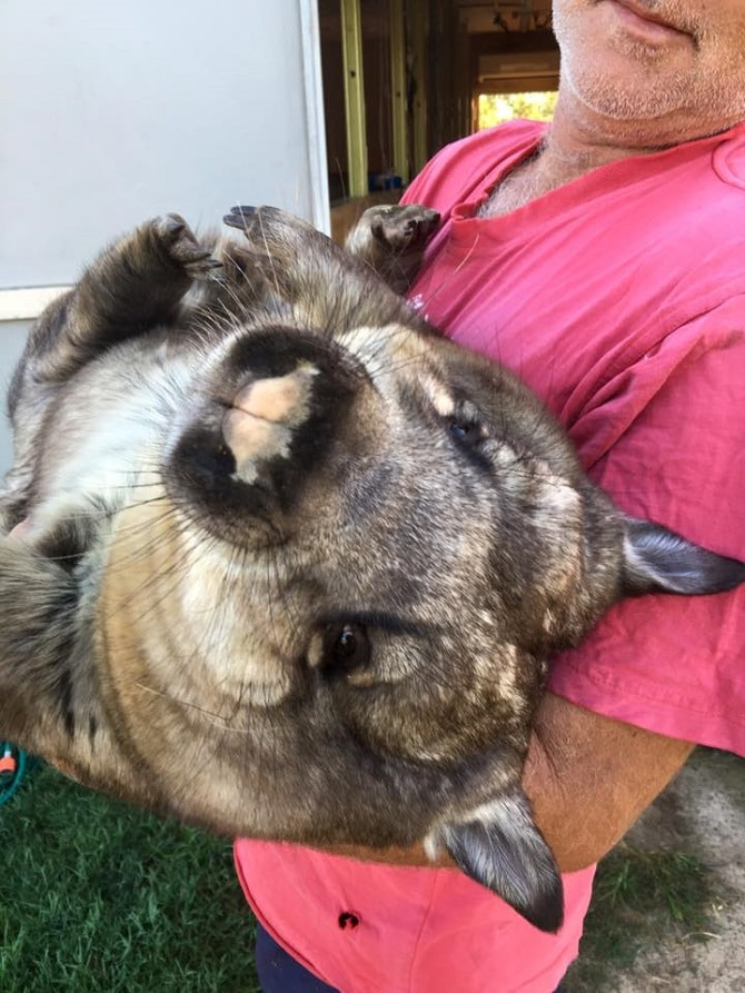 Ruby the Wombat