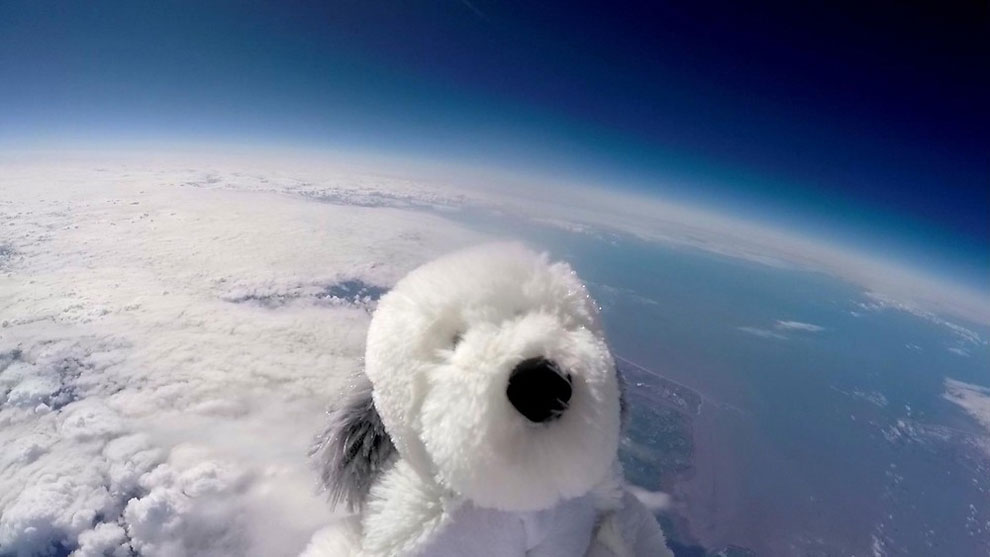 Sam The Dog Into The Stratosphere
