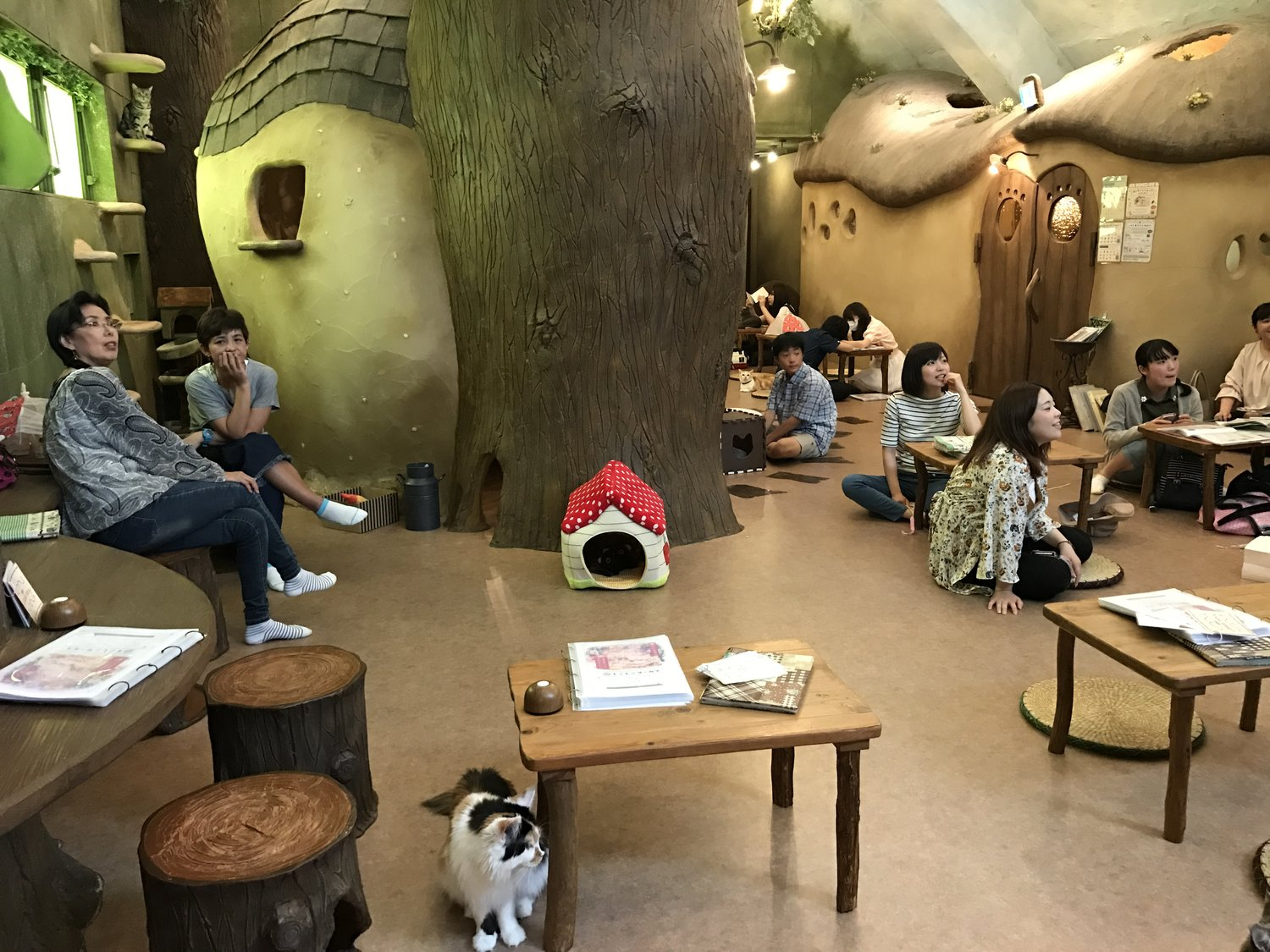 Cat Cafe Temari no Ouchi