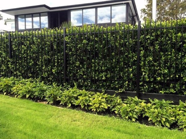 metal-with-hedge-backyard-privacy-fence-design