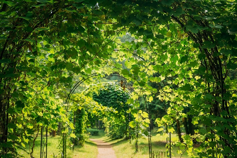 Beautiful Alley In Park. Walkway Lane Path Through Pergola With